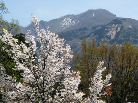経ヶ岳と桜