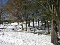 山荘の庭20081122