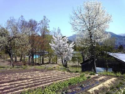 rokurosi3trees200906021