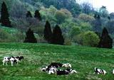 高原牧場2