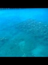 コバルトの海