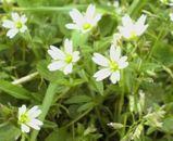 伊吹山の花その2