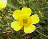 伊吹山の花その1