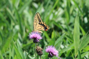 蝶の舞い2