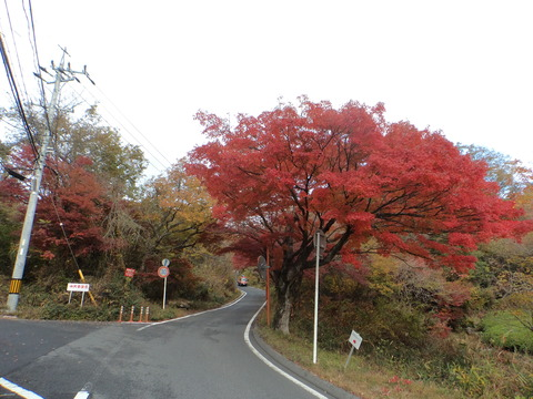 中山道(6) あな、恐ろしや、中山道かえで街道!!  恵那〜彦根約140キロ