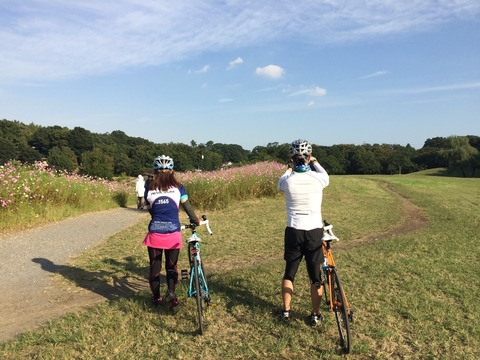 秋桜満開! 世田谷を抜けて野川まで50キロサイクリング
