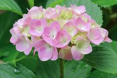 flower_beiz_jp_S00057