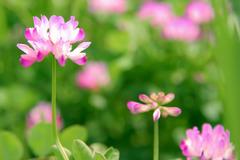 flower_beiz_jp_S09336