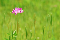 flower_beiz_jp_S09439
