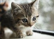 FXで2000万円以上負けた。餌代払えないから飼ってる猫を保健所に出すしかない。