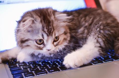 キーボードと猫