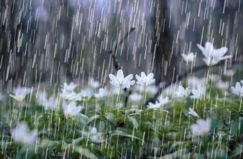 2019.7.7雨1
