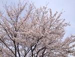 2014-04-03-12-03-48