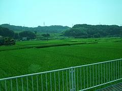2011_0812中井町0004