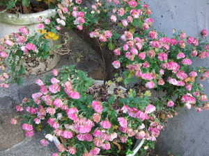 2010_1201庭の花0003