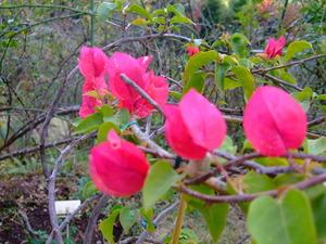 2010_1201庭の花0008