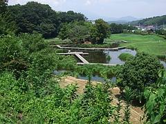 2011_0812中井町0083