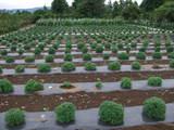 2009_0902ユートピア農園0210