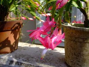 2010_1201庭の花0004