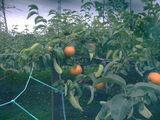 2009_0902ユートピア農園0219