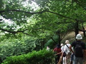 2011_0708松田町0026
