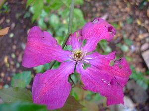 2010_1201庭の花0006