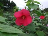 2009_0902ユートピア農園0215