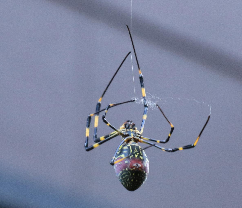 の 糸 蜘蛛