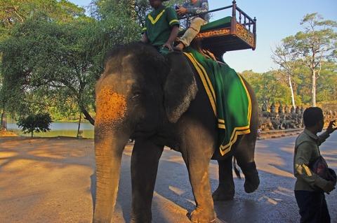 AT_elephant