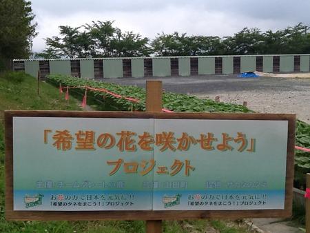 山田町ひまわり