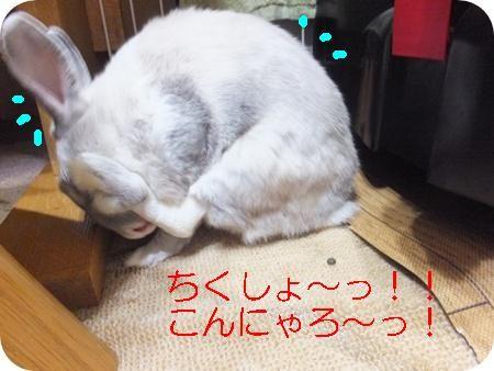 まるソアホック 018