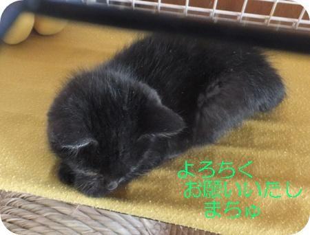 保護猫あずきちゃん 038