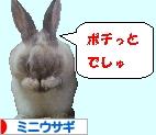 にほんブログ村 うさぎブログ ミニウサギへ