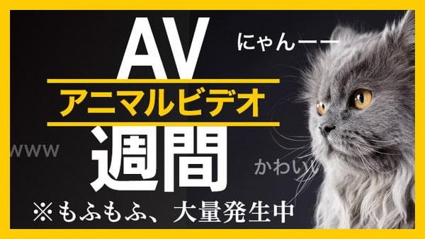 20190922_animalvideo-min