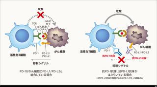 img_inhibitor02