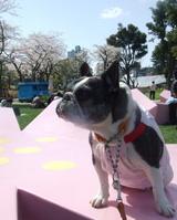 『桜カフェ』のベンチで