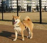 後ろのマンションに街で初めての「動物病院」が出来ました! (、、、ってもう、公園に侵入してるし、、、(^_^;))