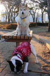 子犬のときによく一緒に追いかけっこした「コタロウ」君