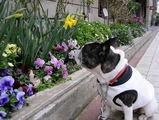 街の中にも、春のお花が増えてきました♪