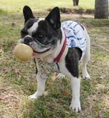 「やっぱり、ボール遊びが好き♪」