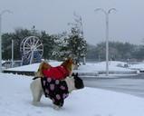 すごい雪だねー