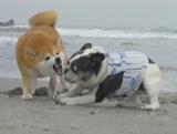 砂掘り遊びも