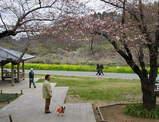 桜にはちょっと早かったみたい