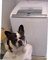 洗濯機がやって来た!!