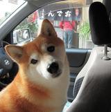 「おでん」を買い出す飼い主待ち。。。