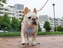 チャチャッとお散歩!!