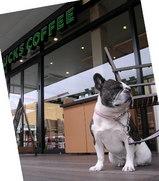 「なぜか?スタバのコーヒーで落ち着く飼い主達。。。」