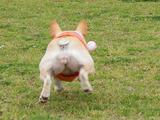ボール遊びで