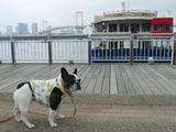 東京ワンクルーズ船を見ながら