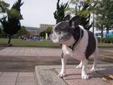 チビッ子達も公園でお散歩(^^)